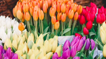 florists_home